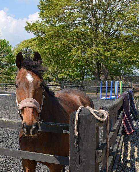 equestrian-7.jpg