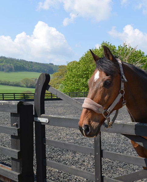 equestrian-2.jpg