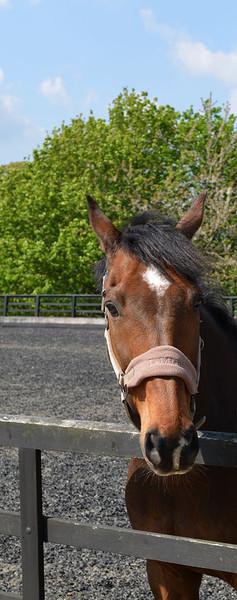 equestrian-1.jpg