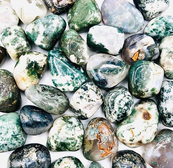 Agate arbre | pierre roulée
