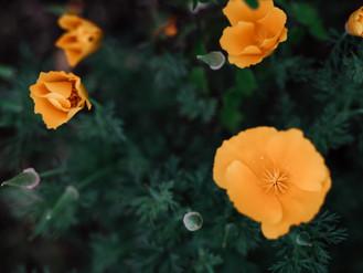 かつて読みたかった若書きエッセイ集『花の命はノー・フューチャー』
