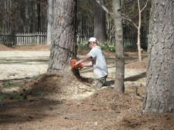 smith tree service tree planting