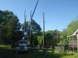 smith tree service contact