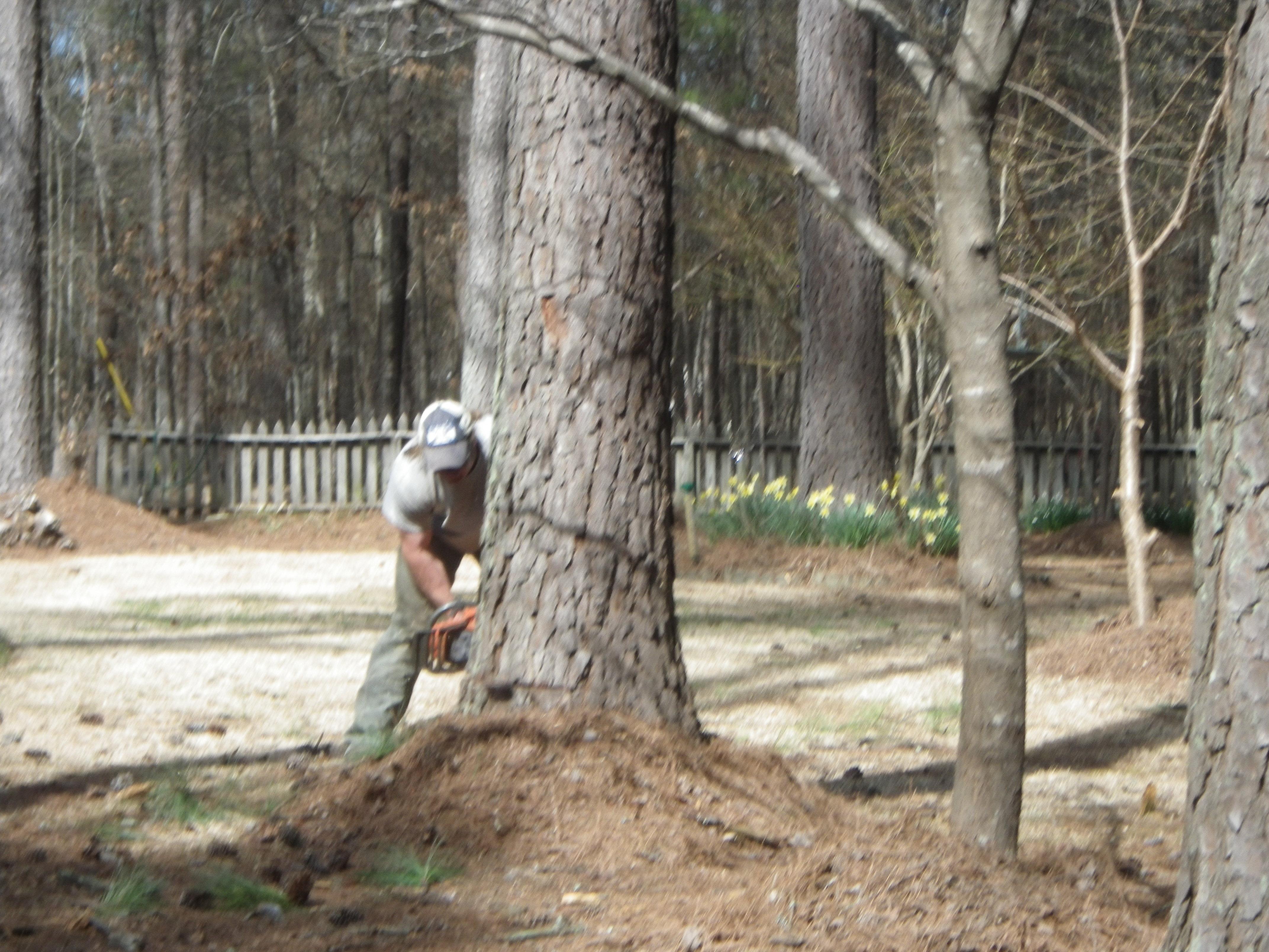 smith tree tree planting