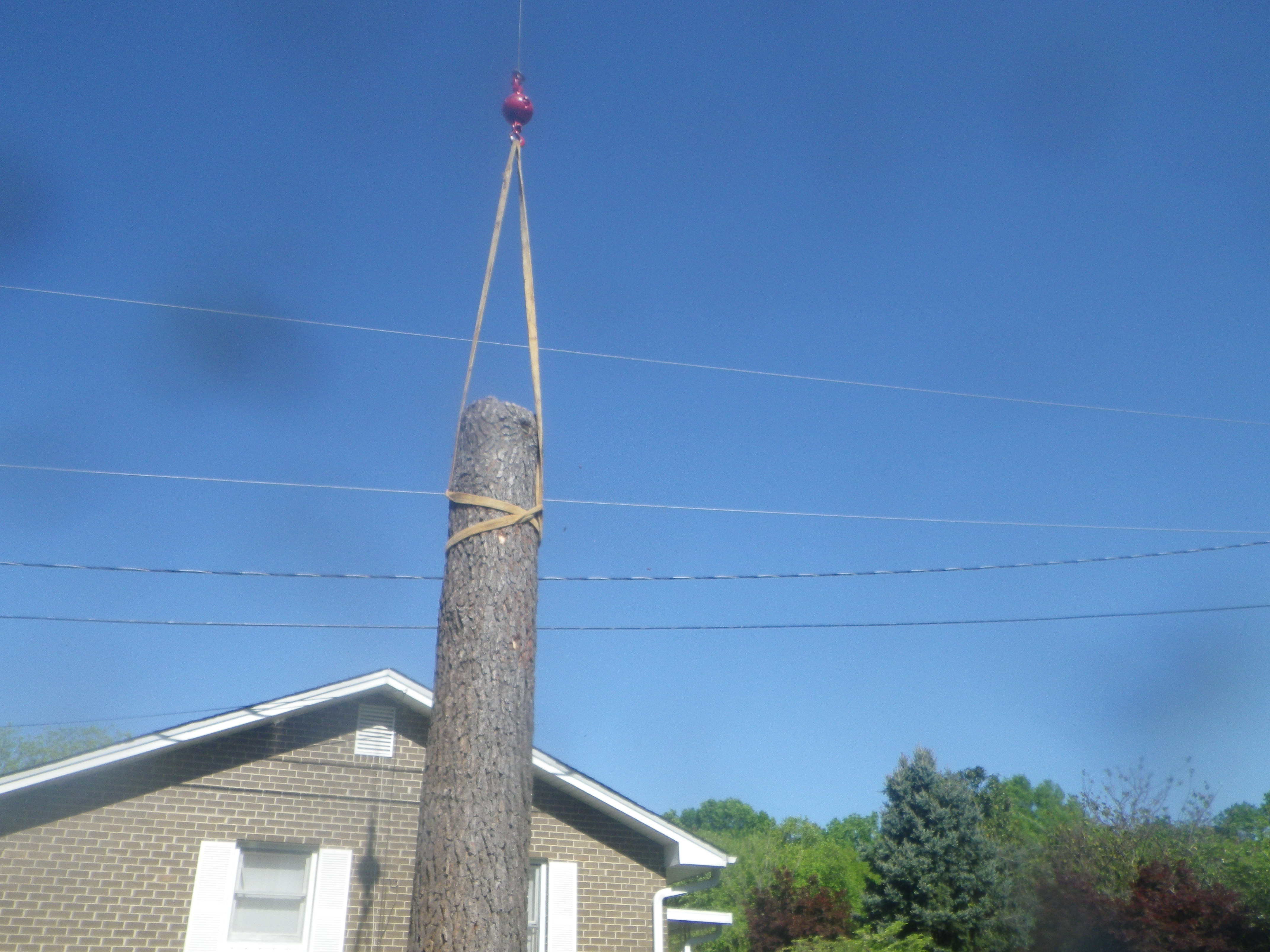 smith tree residential tree removal