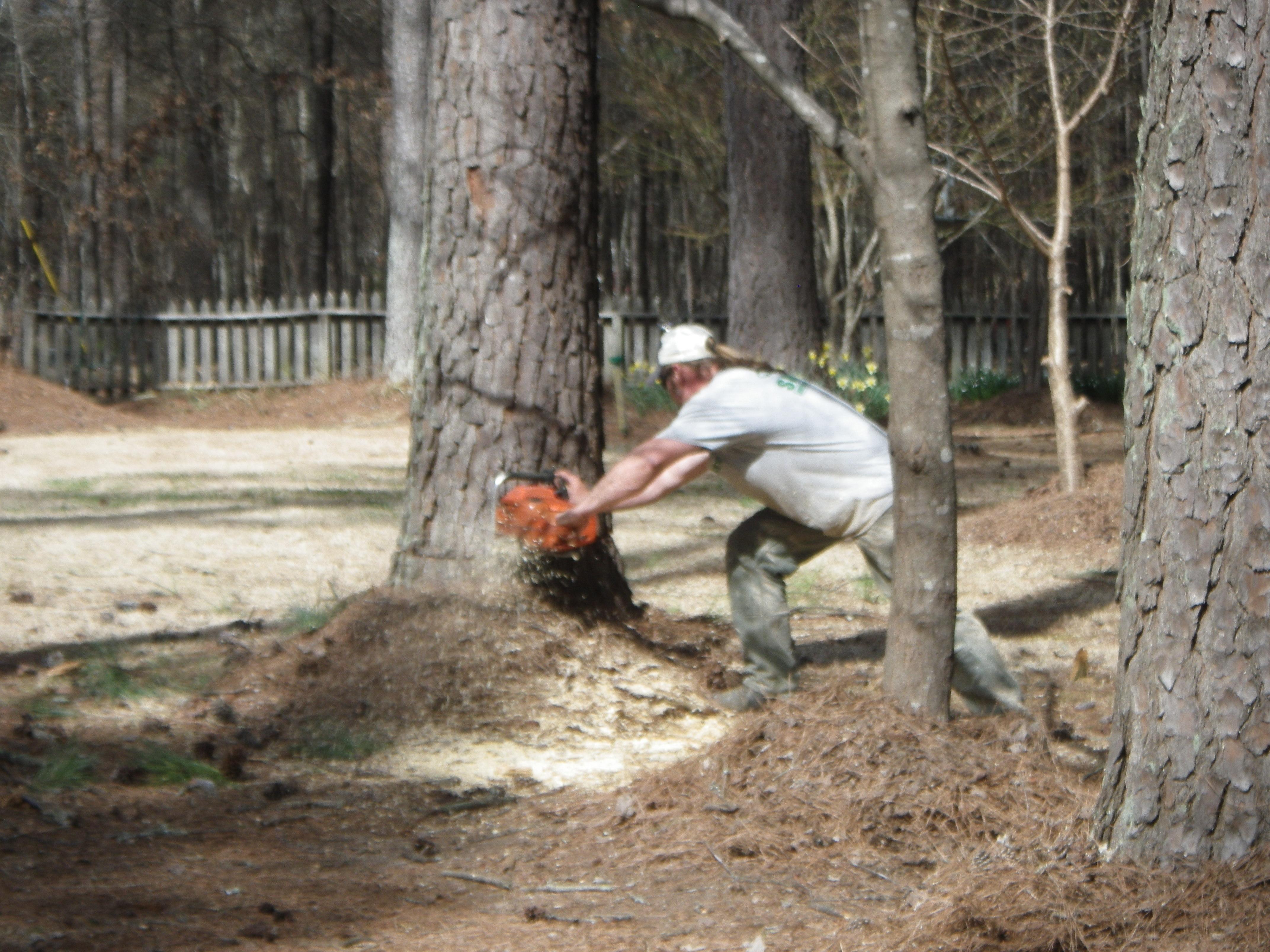 smith tree tree preservation