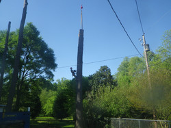smith tree service phone