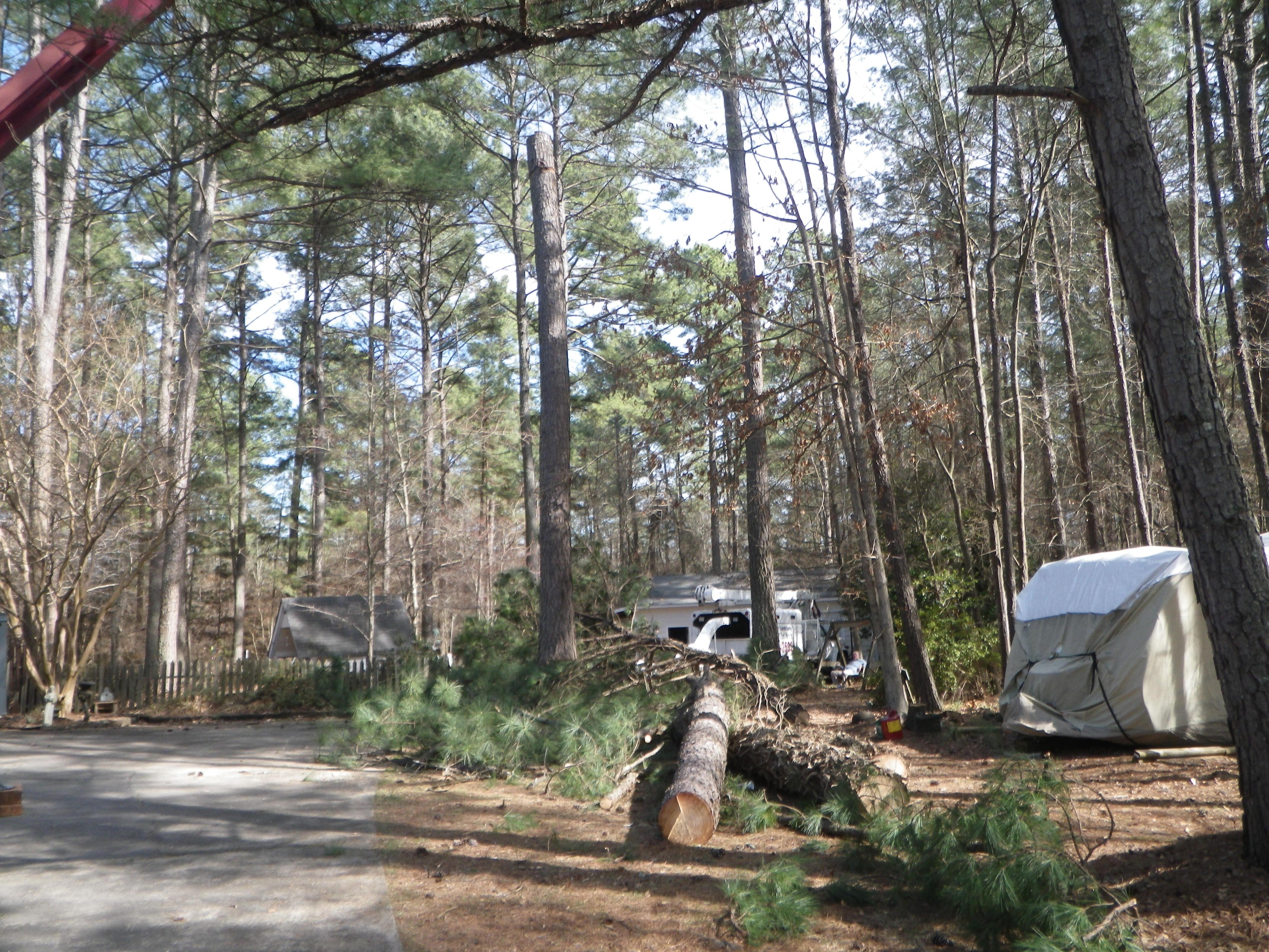 smith tree topsoil