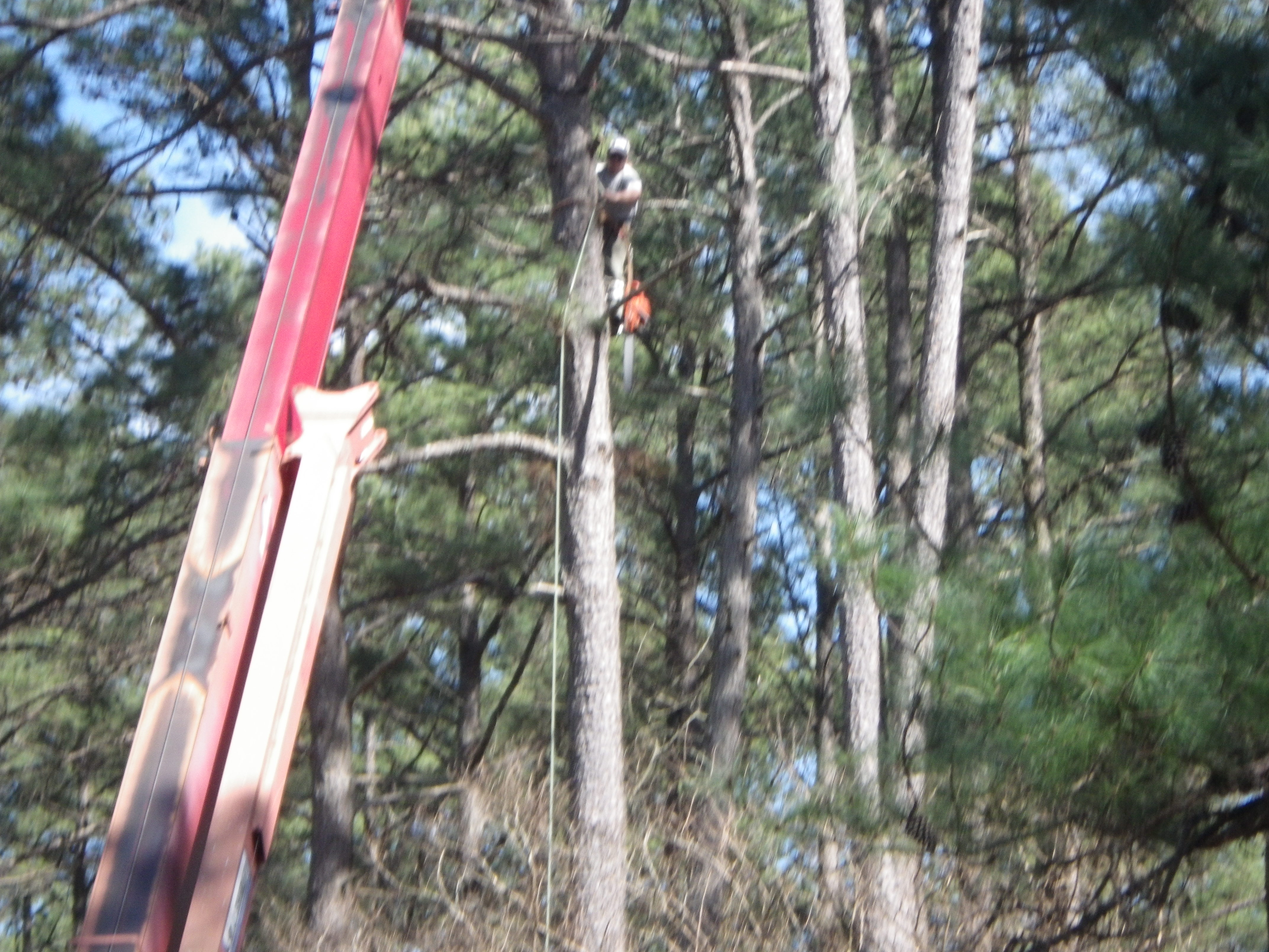 tree preservation services