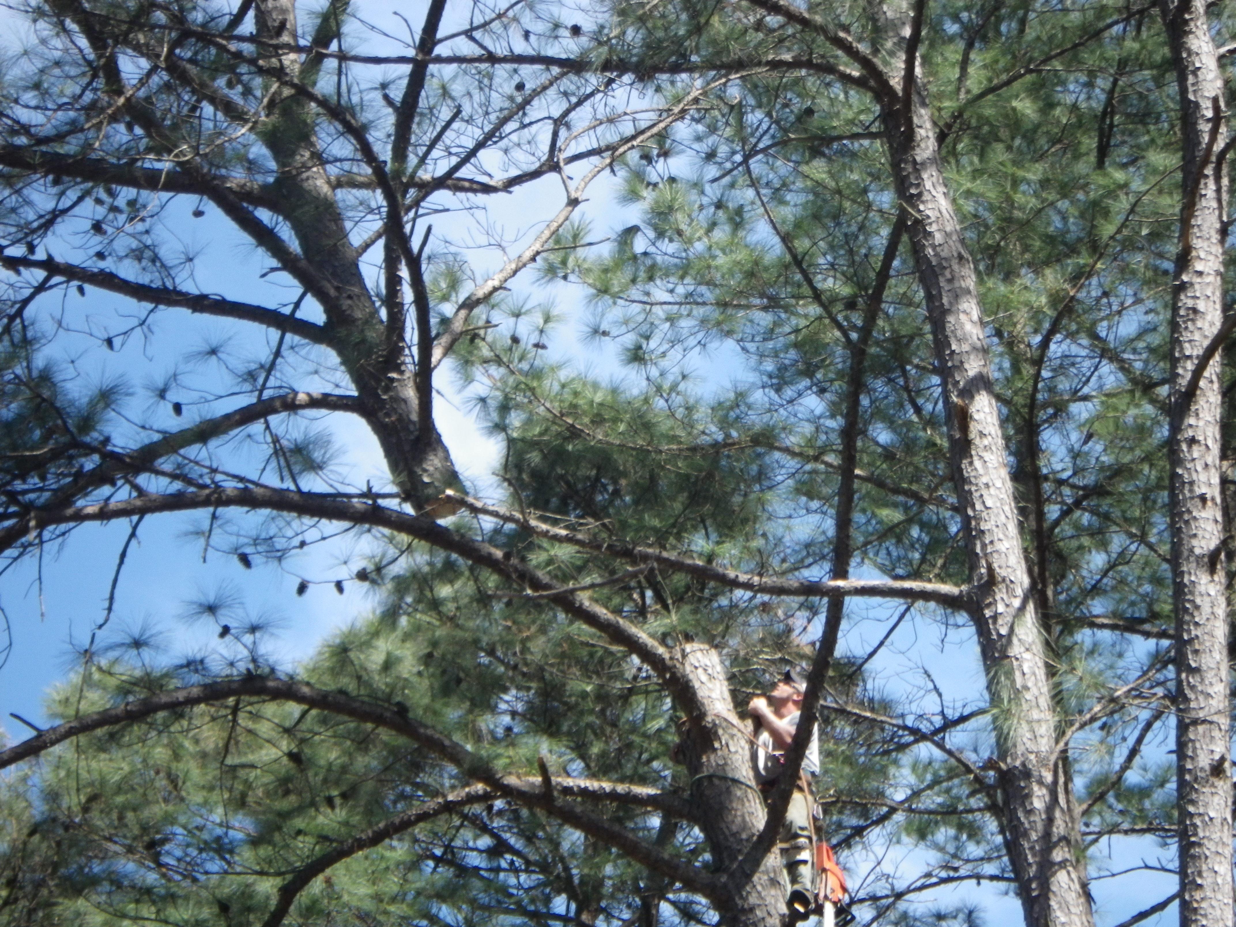 smith tree service phone