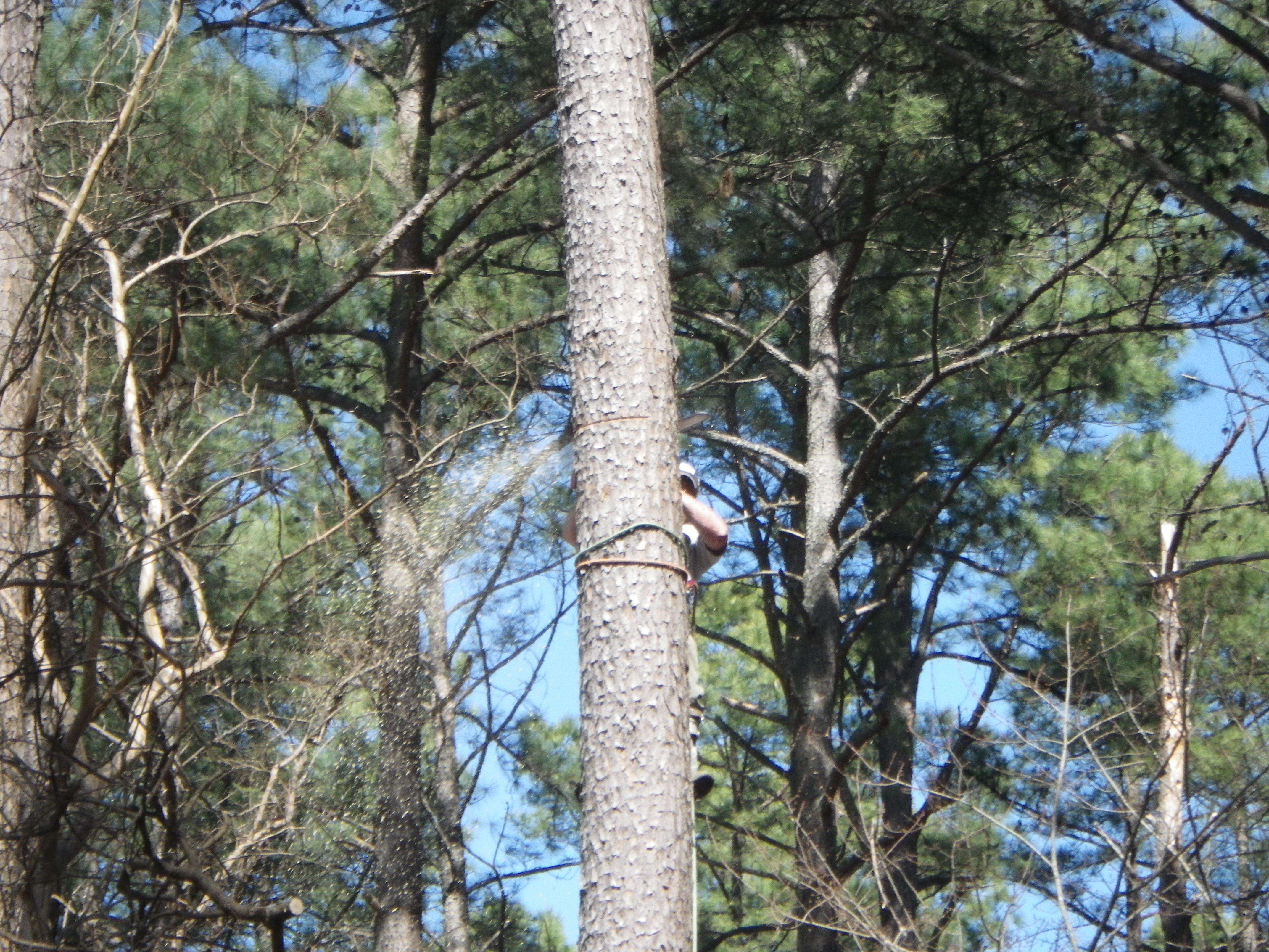 tree removal woodruff sc