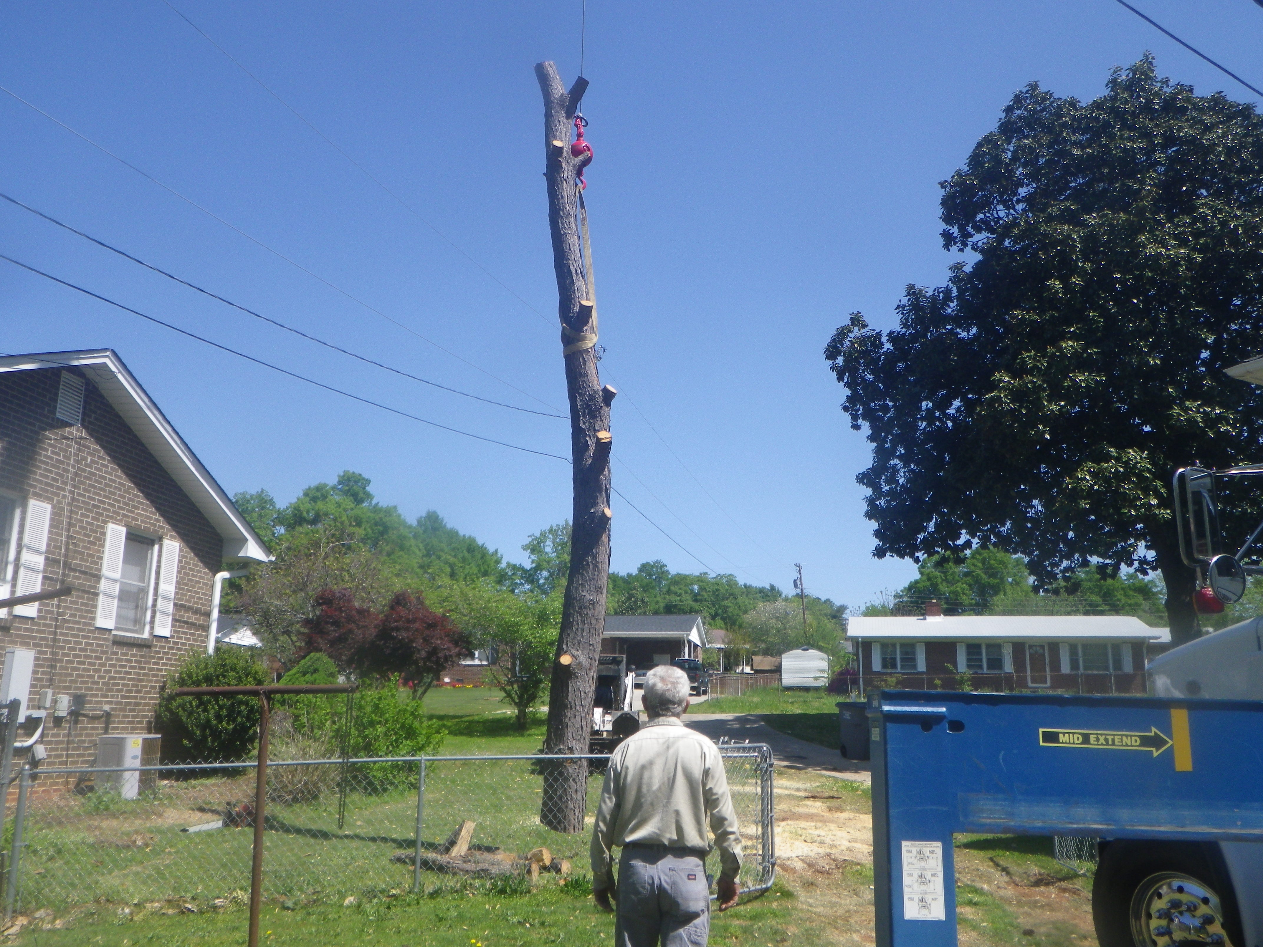 smith tree commercial tree removal