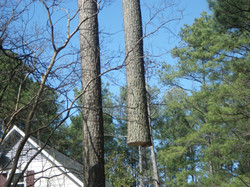 smith tree fungicide