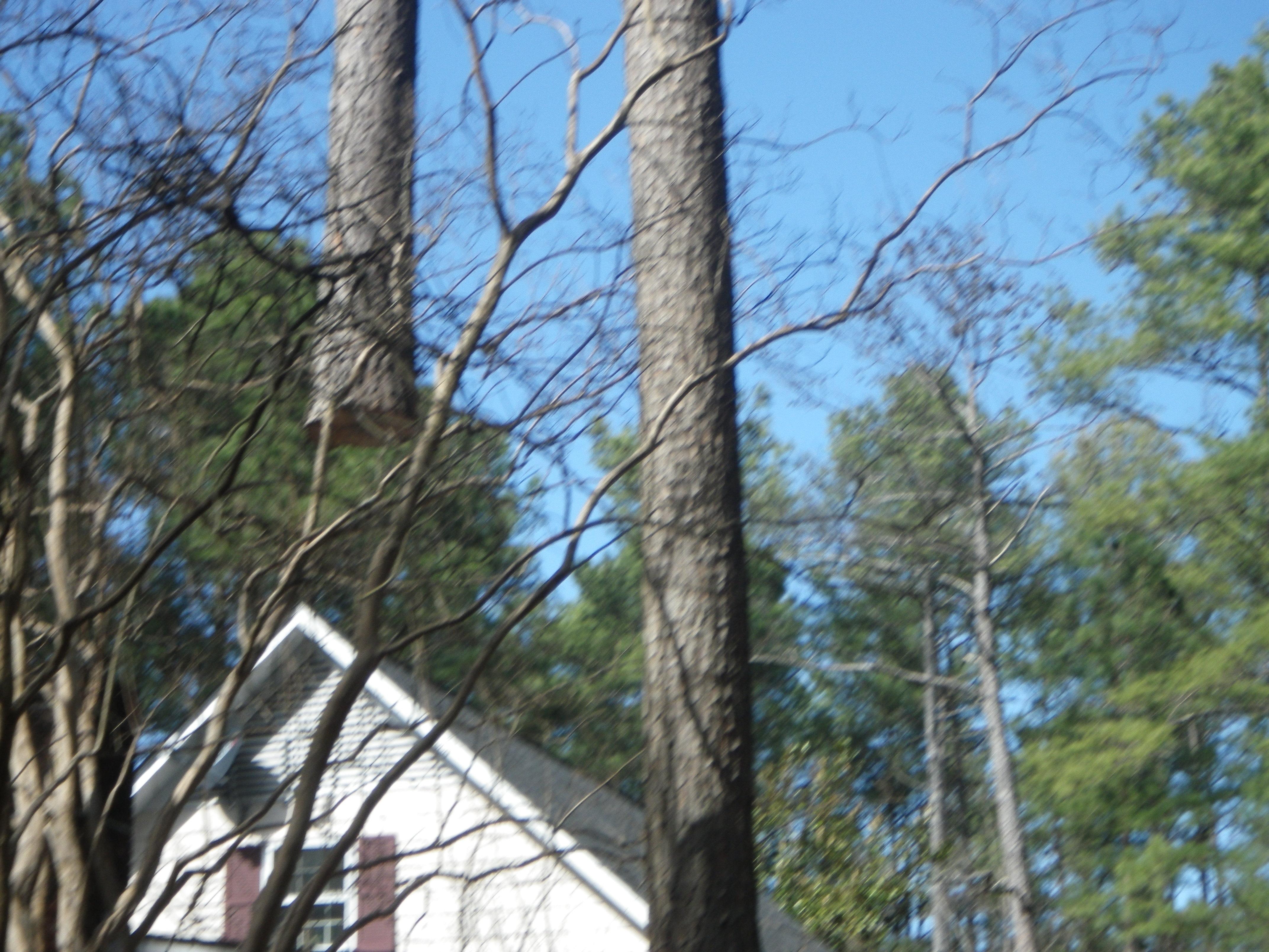 tree preservation woodruff sc