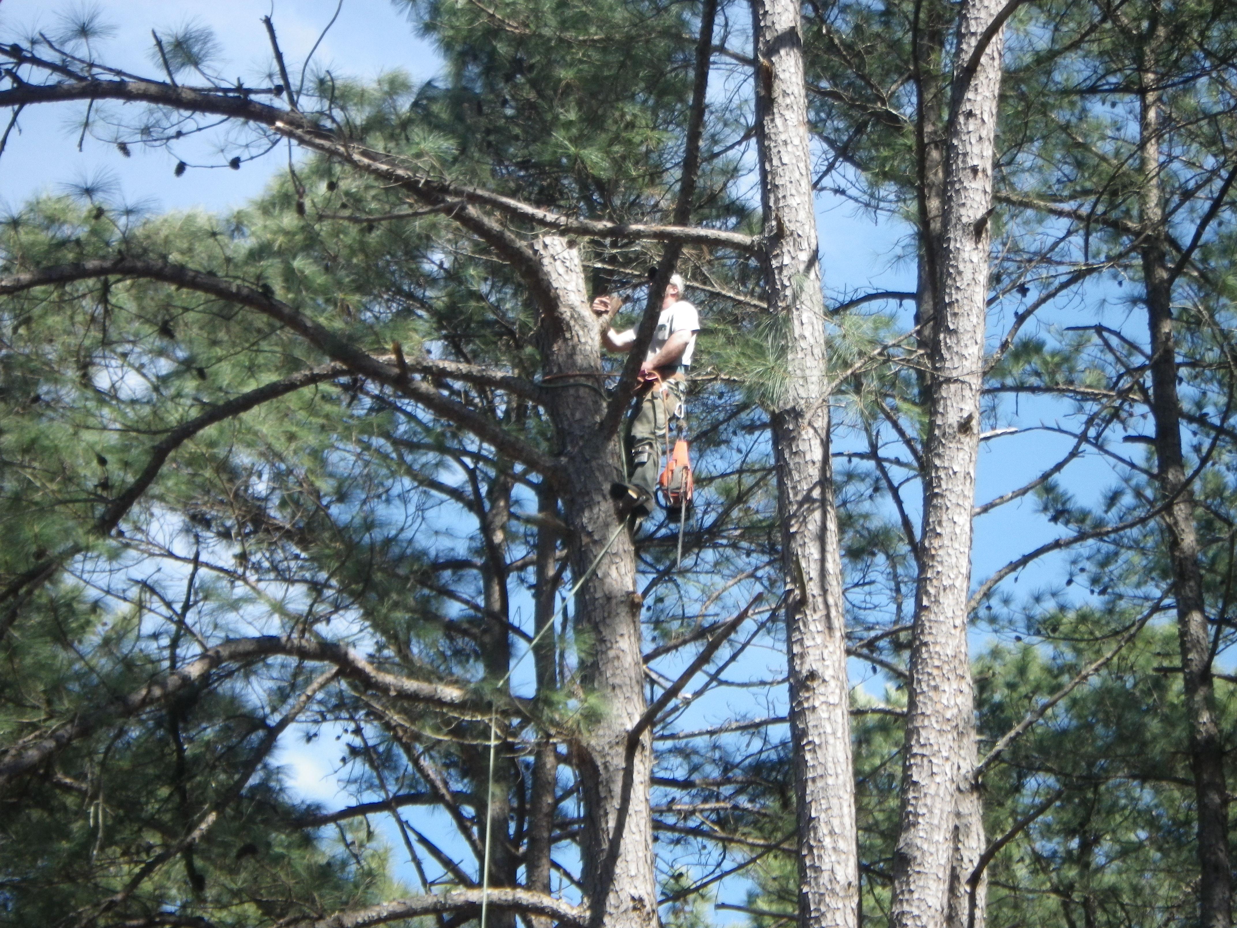 woodruff area tree service