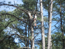 woodruff area tree service