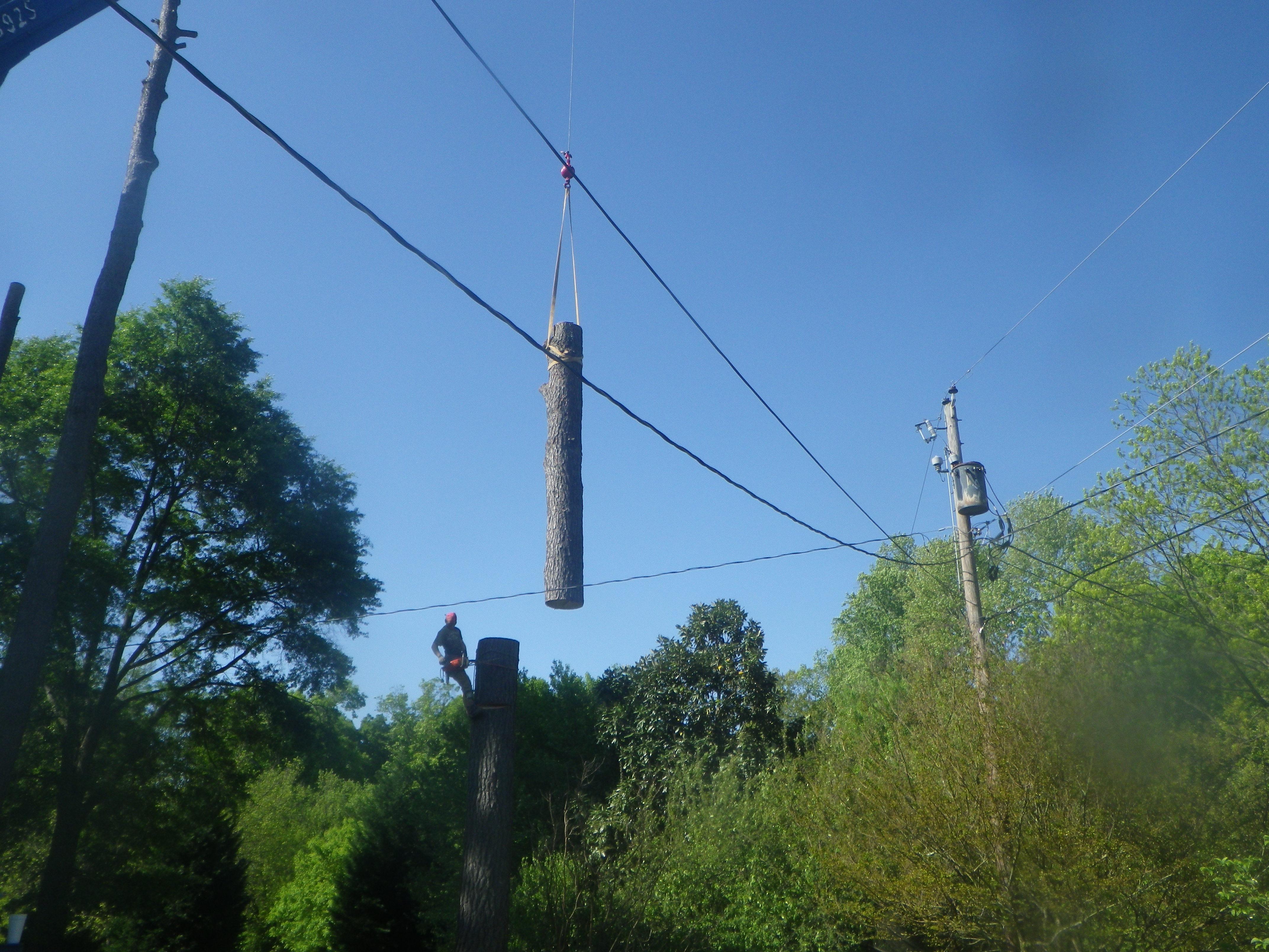 tree preservation spartanburg sc