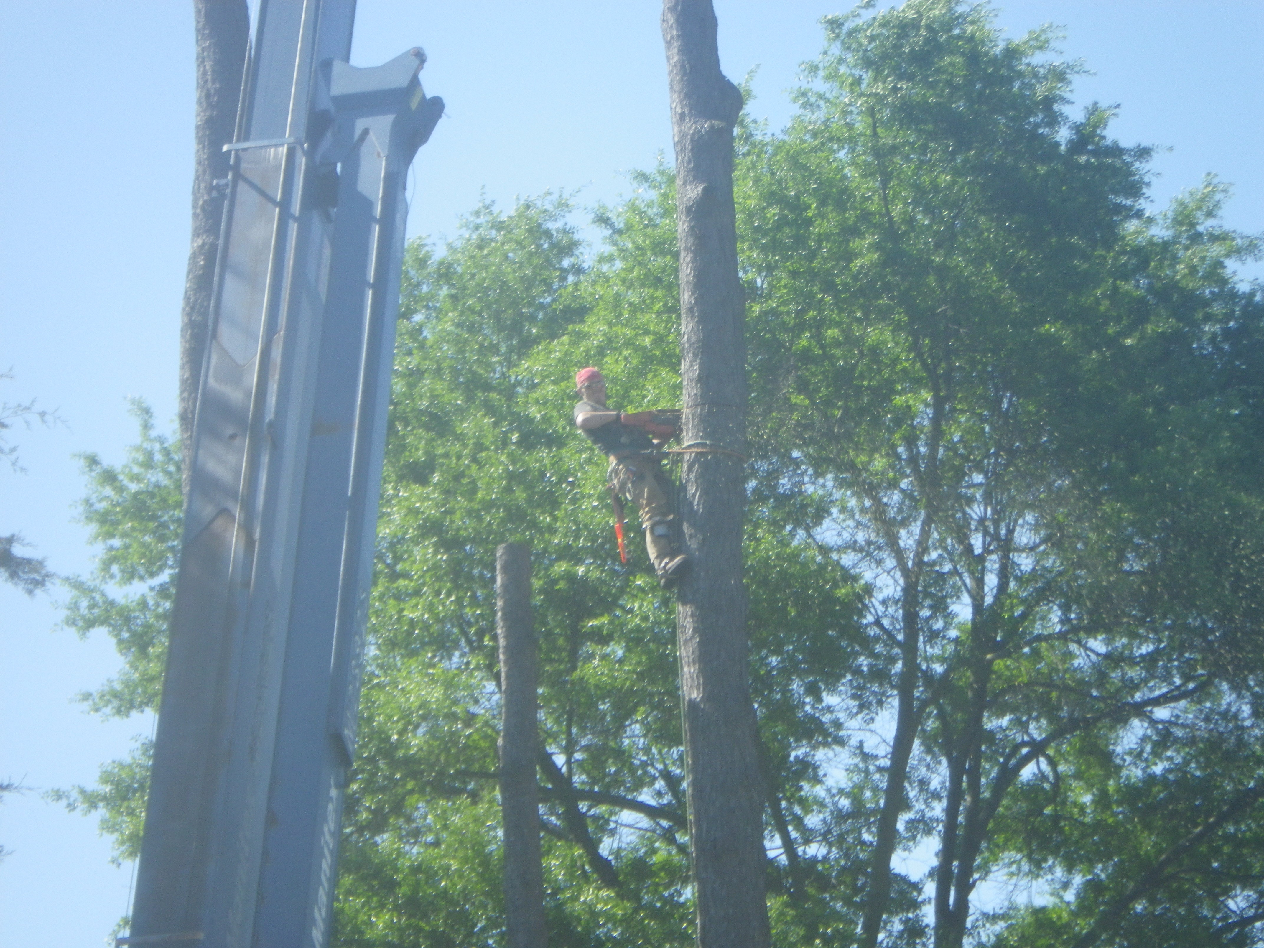 smith tree service email