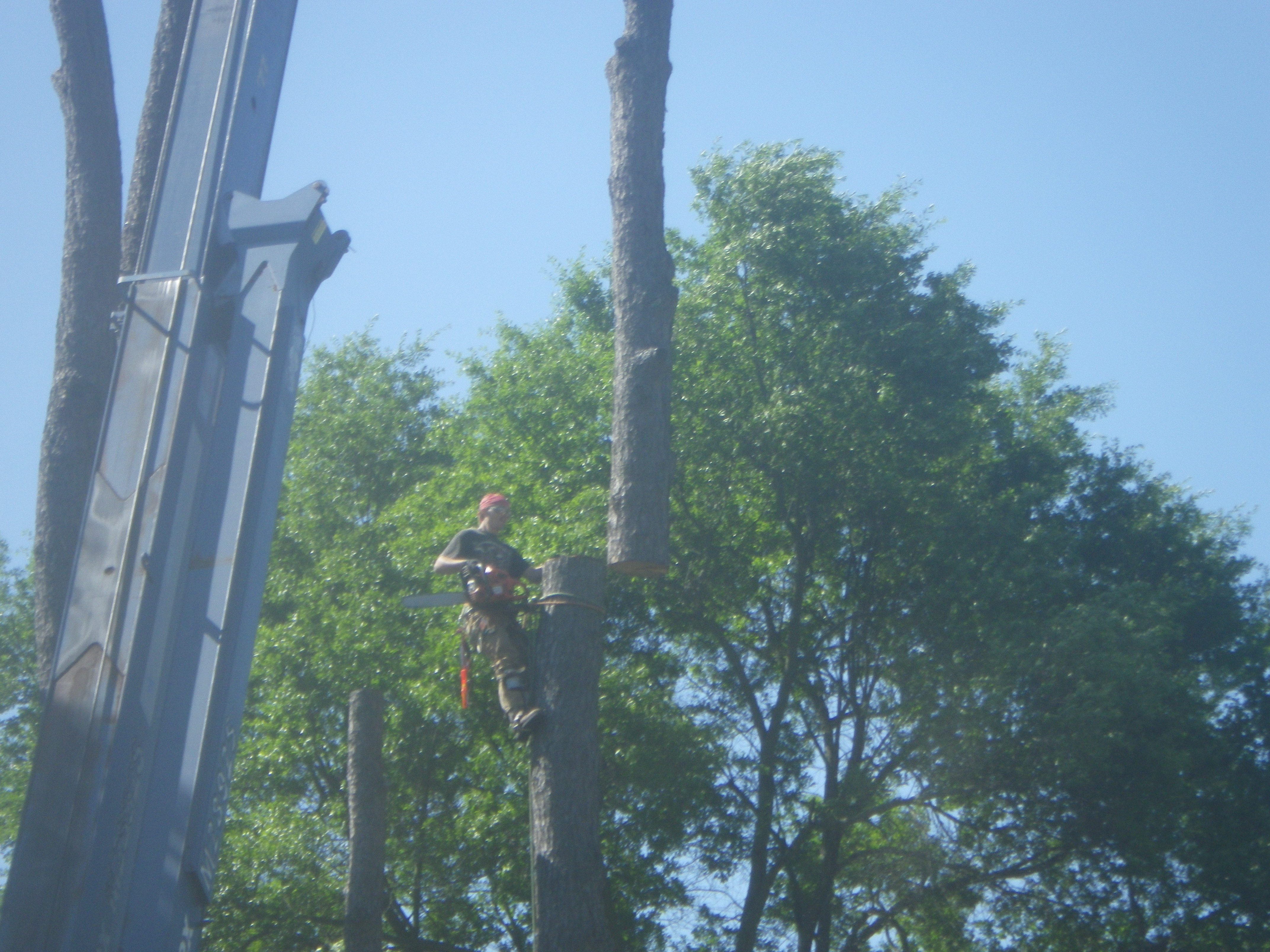 upstate sc tree surgeon