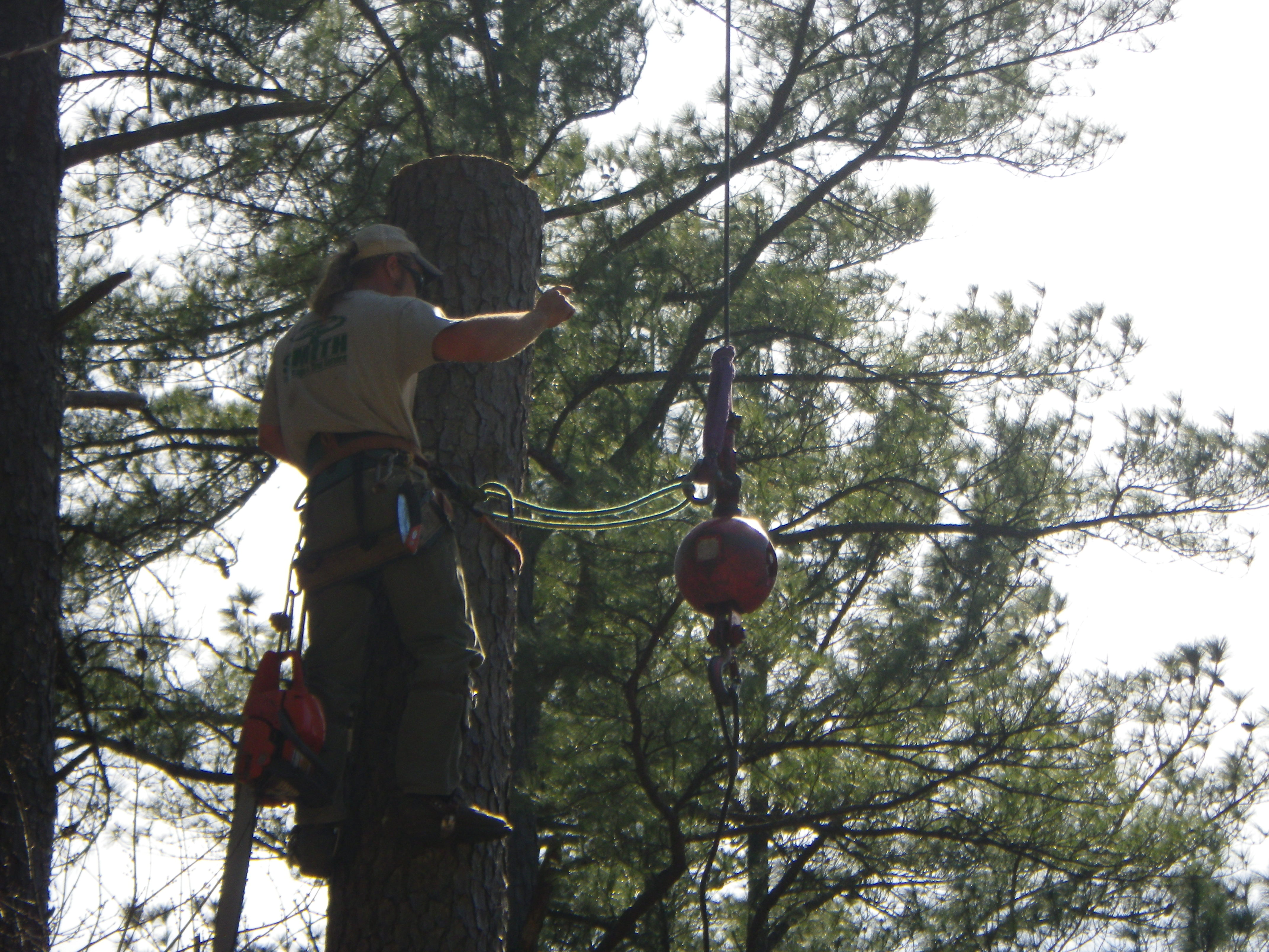 smith tree service fertilization