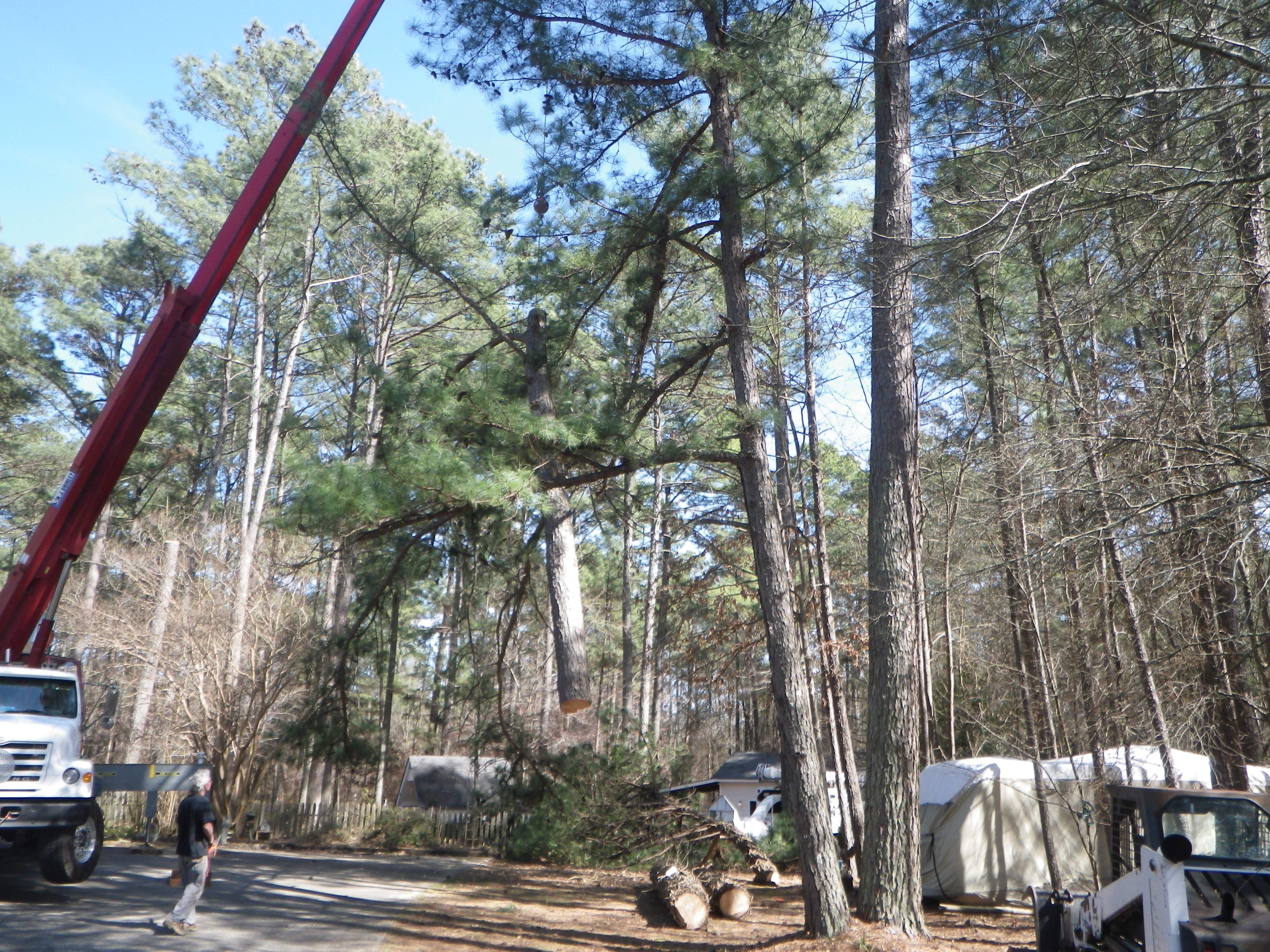 spartanburg area tree surgeon