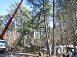 spartanburg area tree surgeon