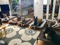 Dog Behaviorist Canoga Park