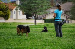 Dog Behaviorist West Hills