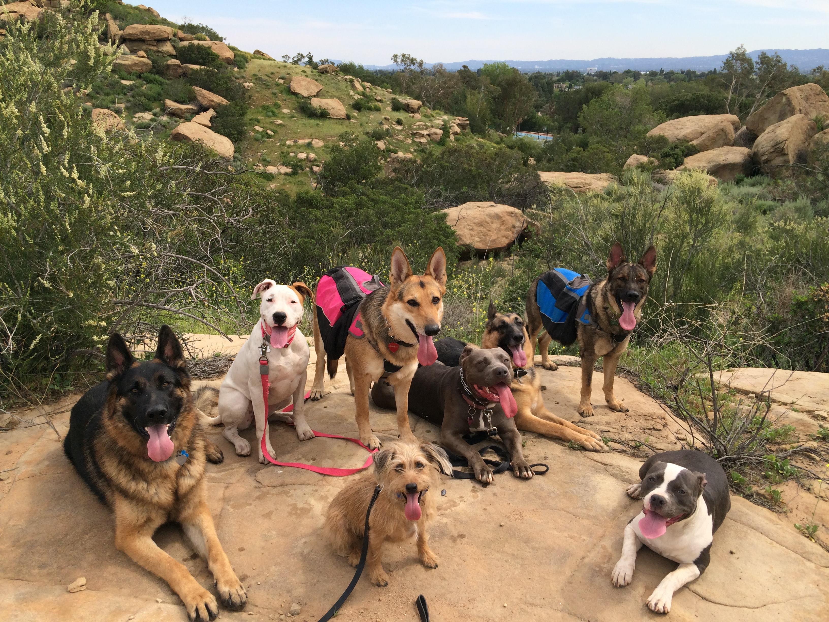 Dog Behaviorist Tarzana