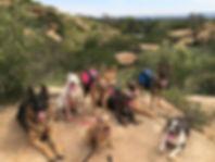 Dog Walking San Fernando Valley
