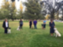 Socialization Dog Training Class