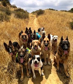 Dog Behaviorist Chatsworth