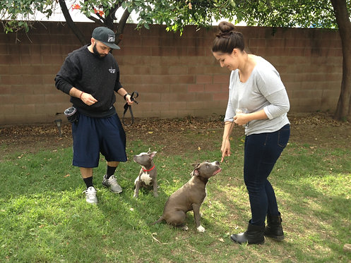 Group Class: Basic Obedience   (6 weeks)