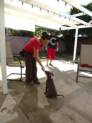 Private Dog Training San Fernando Valley