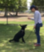 Pet Peeves Dog Training Woodland Hills