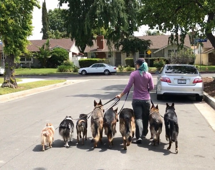 Dog Behaviorist Woodland Hills