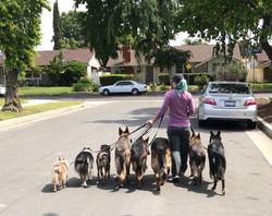 Dog Behaviorist Woodland Hills