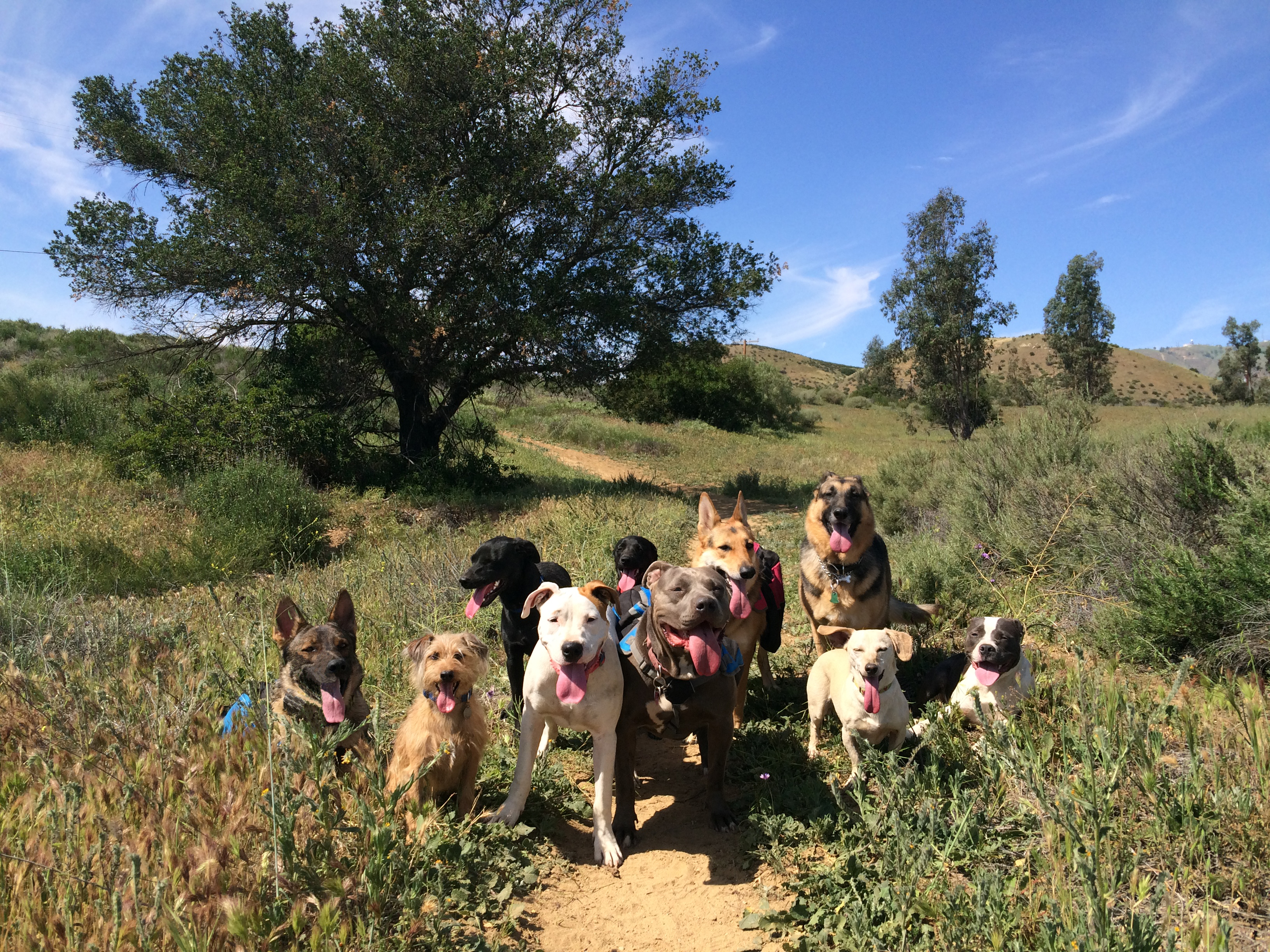 Dog Socialization Canoga Park
