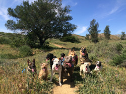 Dog Socialization Canoga Park