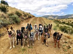 Dog Obedience Calabasas