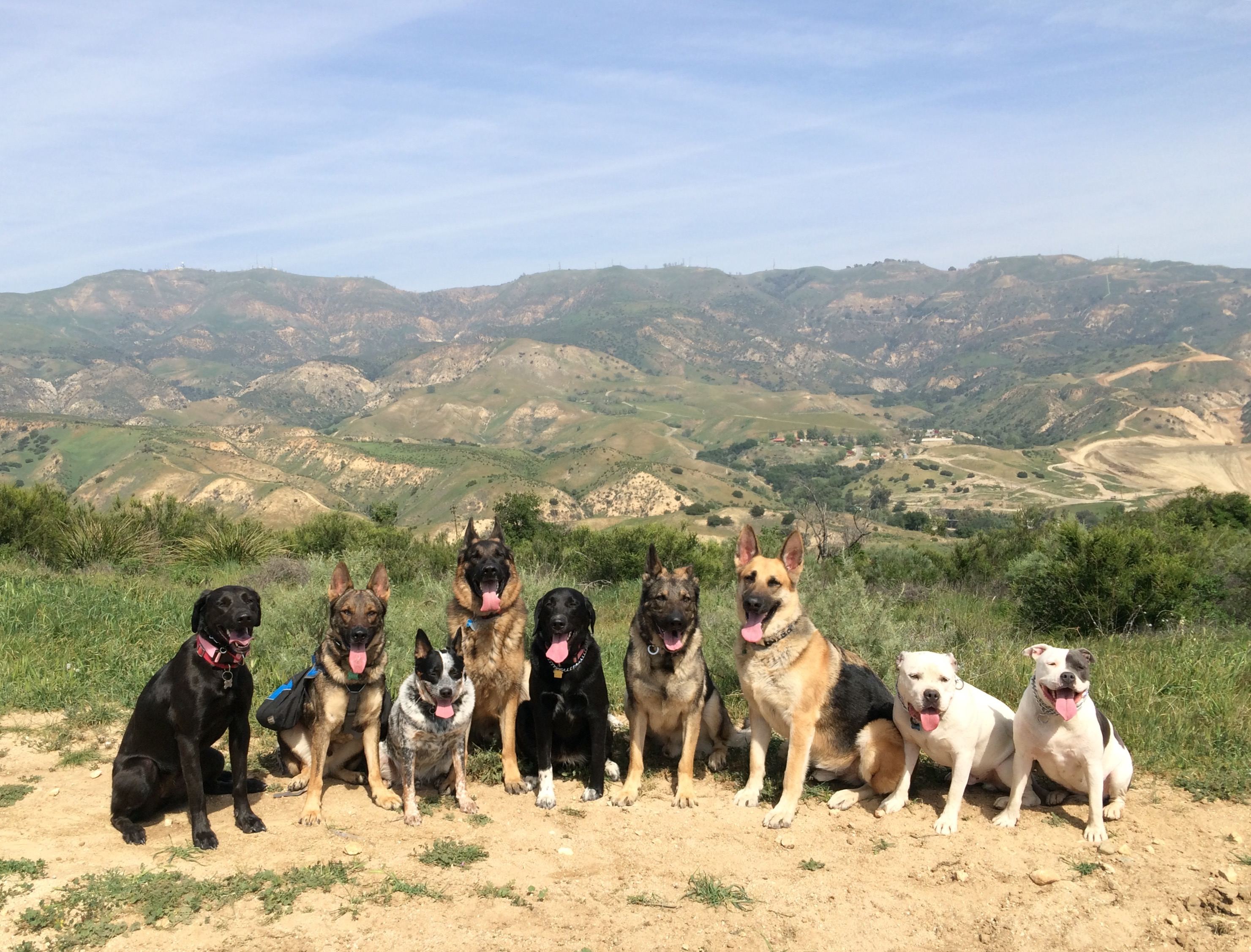 Dog Behaviorist Calabasas