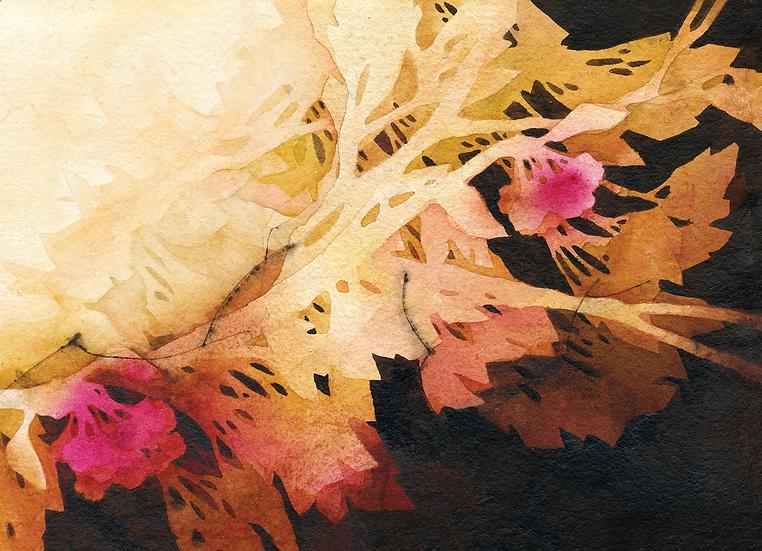 Greeting Cards – Botanical
