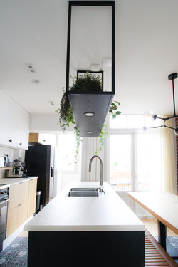 Hanging Kitchen PLants