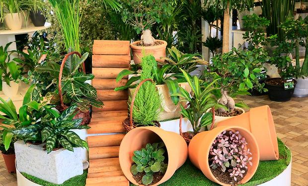 Garden Center - 10_edited.jpg