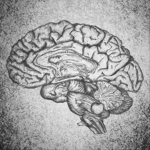 Brain%2520Sketch_edited_edited.jpg
