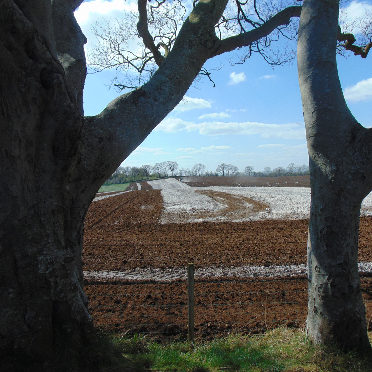 Farmland at The Dark Hedges
