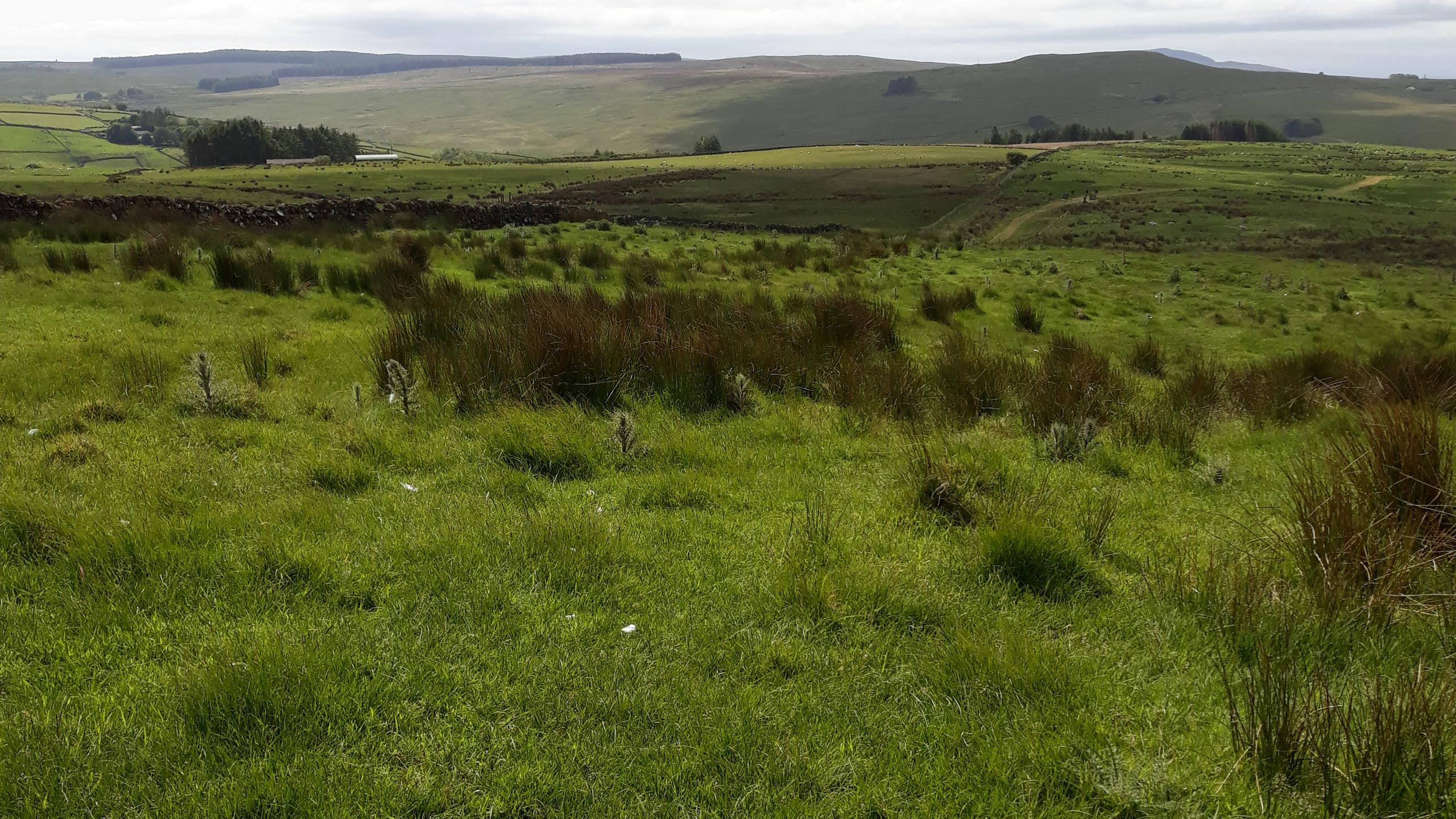 View of Skerrywhirry