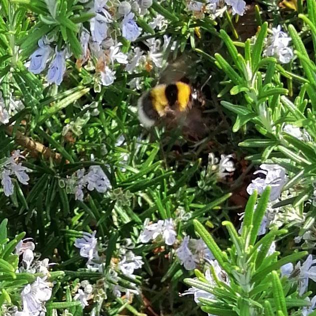 Spot the bumblebee!