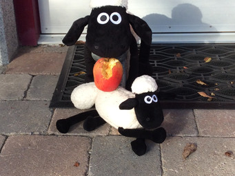 'Ewe' just never know who is going to turn up for an Autumn Break at BallyCairn!