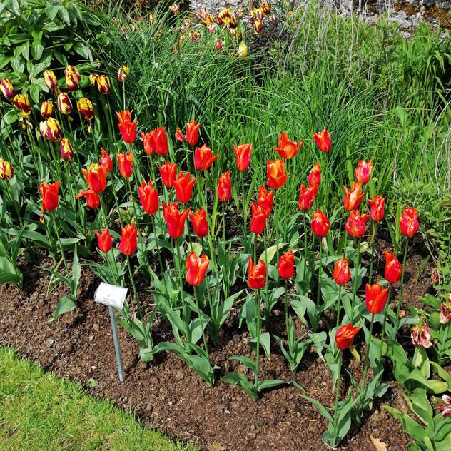 Glenarm Castle Gardens9